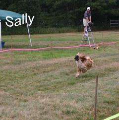 Fun Day Photos of Agility & Coursing